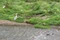 京都新聞写真コンテスト 増水の後