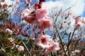 京都新聞写真コンテスト 春の日