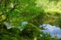 京都新聞写真コンテスト 新緑の古刹