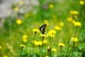京都新聞写真コンテスト 蝶の春