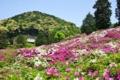 京都新聞写真コンテスト 花の山
