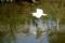 京都新聞写真コンテスト 低空飛行