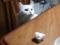 ネコ対ティッシュ #1