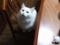 ネコ対ティッシュ #2