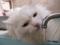 水飲み猫 流水派 #2