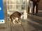 山川PAの猫 #01