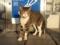 山川PAの猫 #03