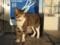 山川PAの猫 #04