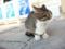 山川PAの猫 #05
