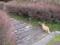 東公園の猫 #35