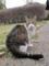 東公園の猫 #38