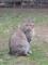 東公園の猫 #39