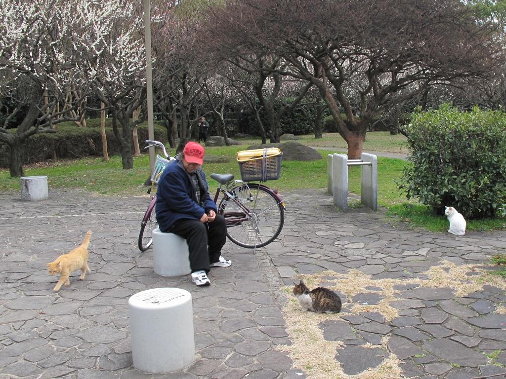 東公園の猫 #40