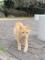 東公園の猫 #41