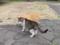 東公園の猫 #42