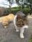 東公園の猫 #43