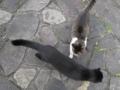 東公園の猫 #44