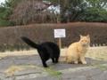 東公園の猫 #45
