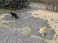 東公園の猫 #47
