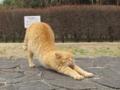 東公園の猫 #48