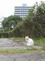 東公園の猫 #49