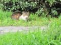 東公園の猫 #106