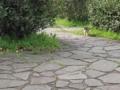 東公園の猫 #107