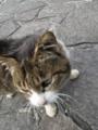東公園の猫 #109