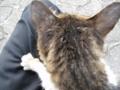 東公園の猫 #111