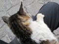 東公園の猫 #112
