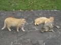 東公園の猫 #156