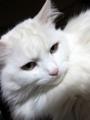 2010年 大晦日のネコ #2