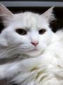 2010年 大晦日のネコ #3