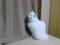 2011年 大晦日のネコ #1