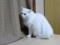 2011年 大晦日のネコ #2