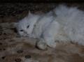 2013年 大晦日のネコ #3