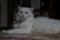 2013年 大晦日のネコ #4