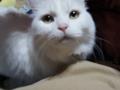 2014年 お正月のネコ #3