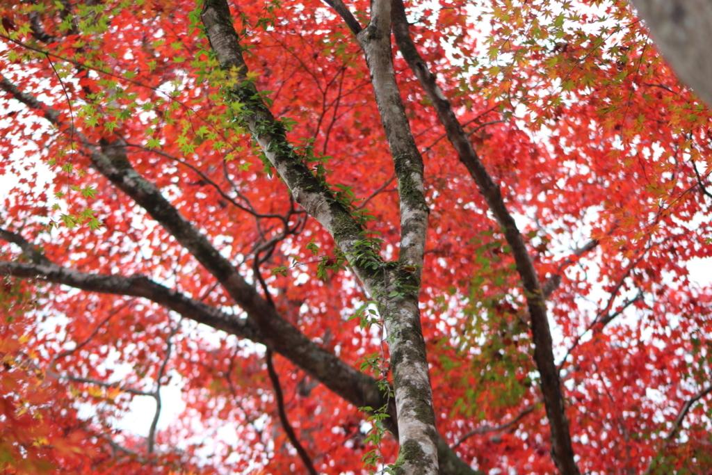 f:id:takowasaonigiri:20171111231441j:plain
