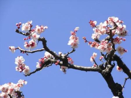 f:id:takuboku_no_iki:20110302174341j:image