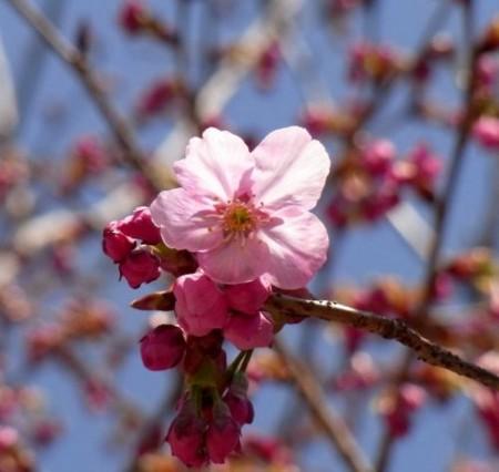 f:id:takuboku_no_iki:20110408172726j:image