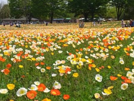 f:id:takuboku_no_iki:20110510050944j:image