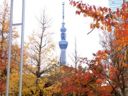 f:id:takuboku_no_iki:20111209054147j:image