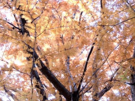 f:id:takuboku_no_iki:20111218171615j:image