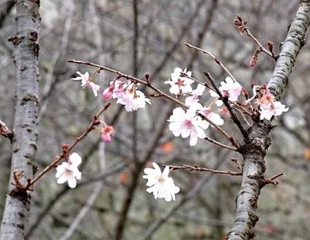 f:id:takuboku_no_iki:20111227170635j:image