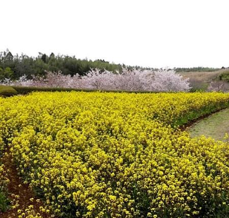 f:id:takuboku_no_iki:20120429170632j:image