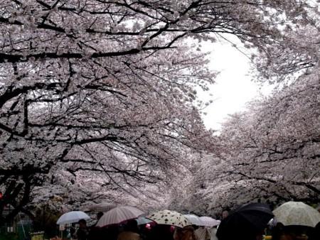 f:id:takuboku_no_iki:20130327171739j:image