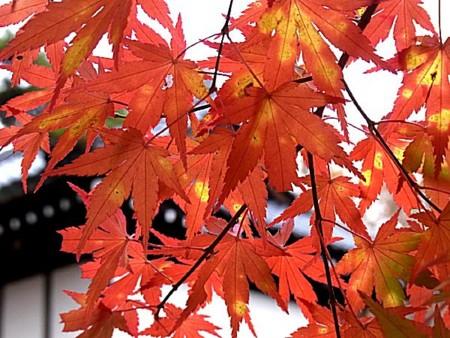 f:id:takuboku_no_iki:20131106170141j:image