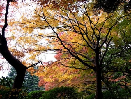 f:id:takuboku_no_iki:20131205170433j:image