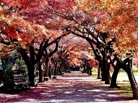 f:id:takuboku_no_iki:20131211165131j:image:w640
